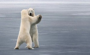 ice_dancing_polar_bears_funny